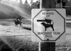 Beware machine gun dog