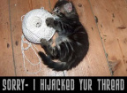 Thread hijack sorry cat