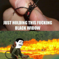 Black widow spider I'm not scared