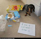 Cereal killer dog