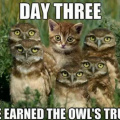 Cat earned owls' trust