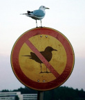 Bird on no bird sign