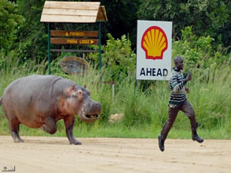 hippo_endurance_training.jpg