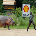 Hippo endurance training