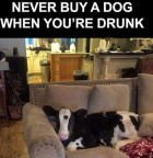 Don't buy a dog when drunk
