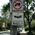 Neighbourhood watch with Batman