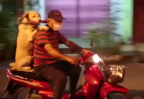 Dog riding a scooter