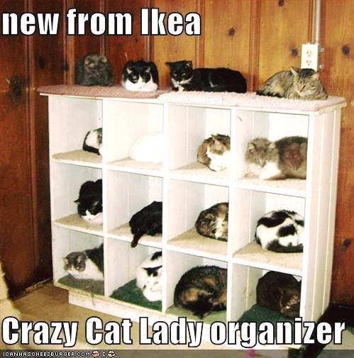 crazy_cat_lady_organizer.jpg