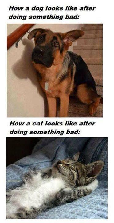 How a dog and a cat look after doing something bad