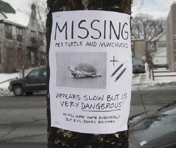 missing_pet_turtle.jpg